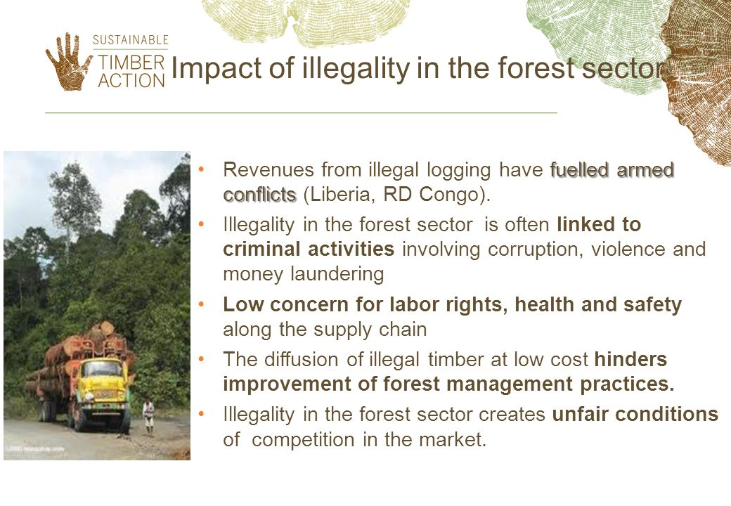 Impact of illegality in the forest sector