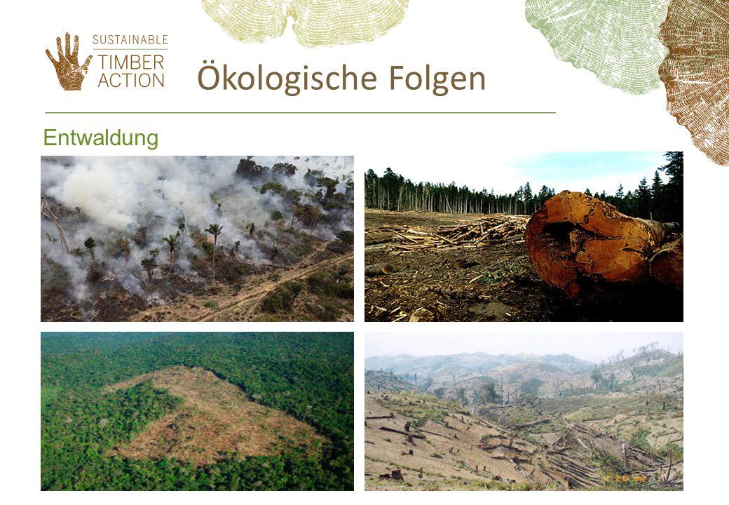 Ökologische Folgen Entwaldung 6
