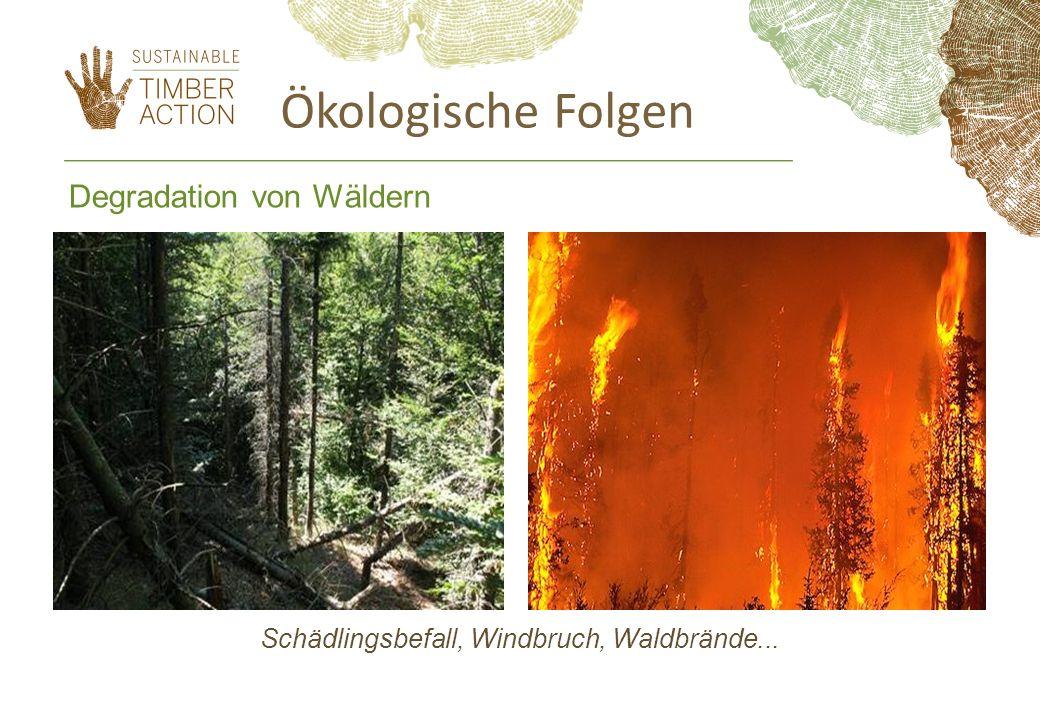Schädlingsbefall, Windbruch, Waldbrände...