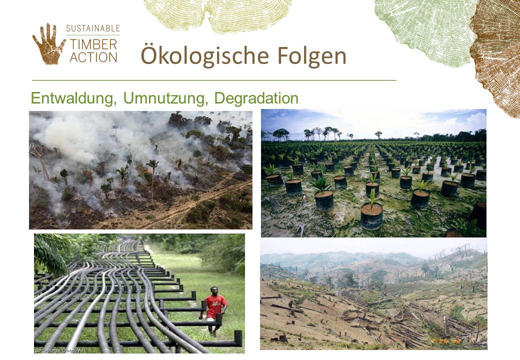 Ökologische Folgen Entwaldung, Umnutzung, Degradation 11