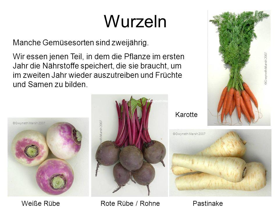 Wurzeln Manche Gemüsesorten sind zweijährig.