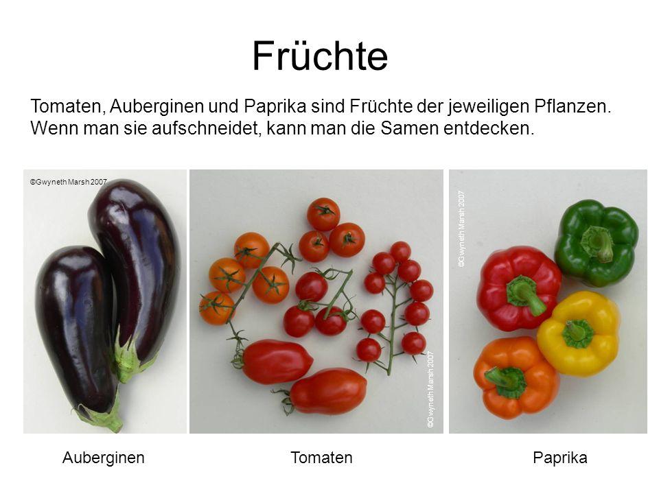 FrüchteTomaten, Auberginen und Paprika sind Früchte der jeweiligen Pflanzen. Wenn man sie aufschneidet, kann man die Samen entdecken.