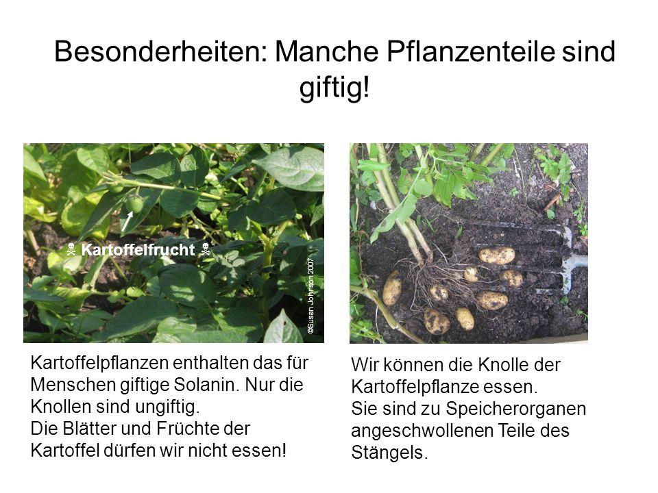 Besonderheiten: Manche Pflanzenteile sind giftig!