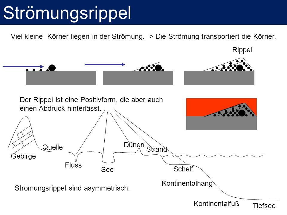 Strömungsrippel Viel kleine Körner liegen in der Strömung. -> Die Strömung transportiert die Körner.