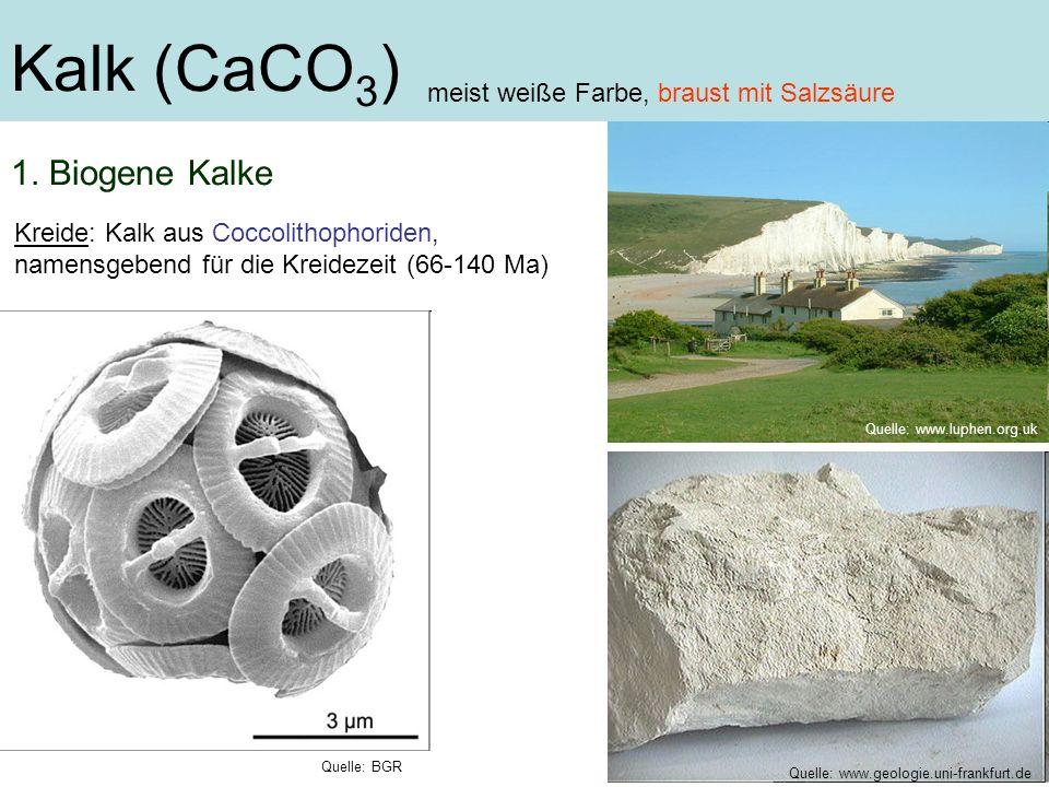 Kalk (CaCO3) 1. Biogene Kalke meist weiße Farbe, braust mit Salzsäure