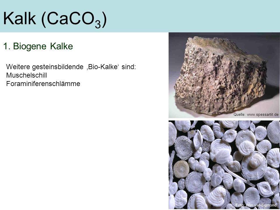 Kalk (CaCO3) 1. Biogene Kalke