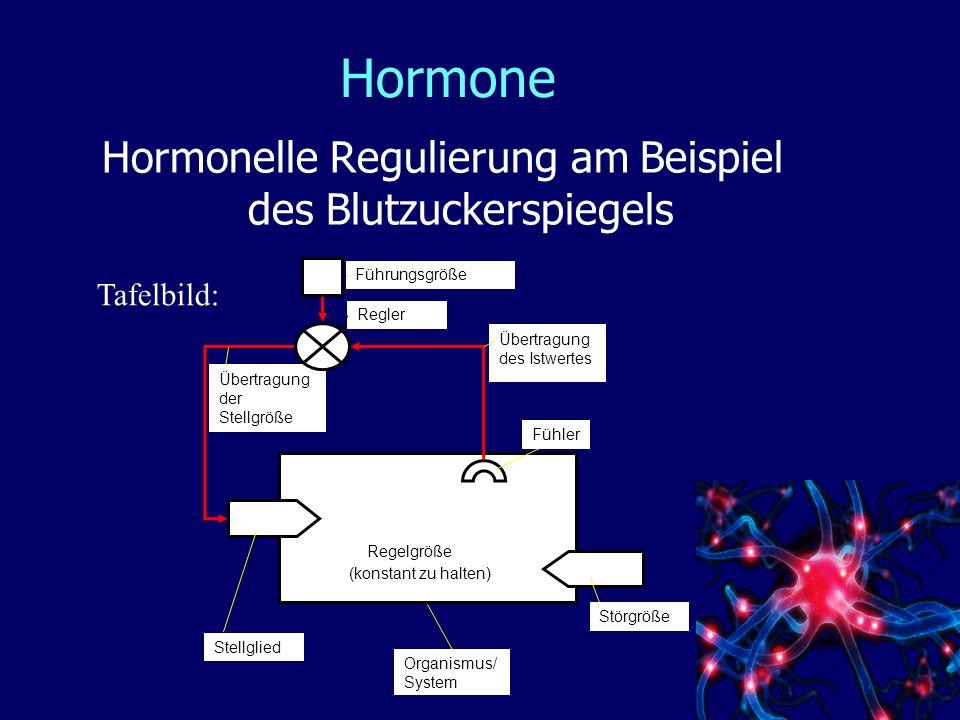 Hormonelle Regulierung am Beispiel des Blutzuckerspiegels