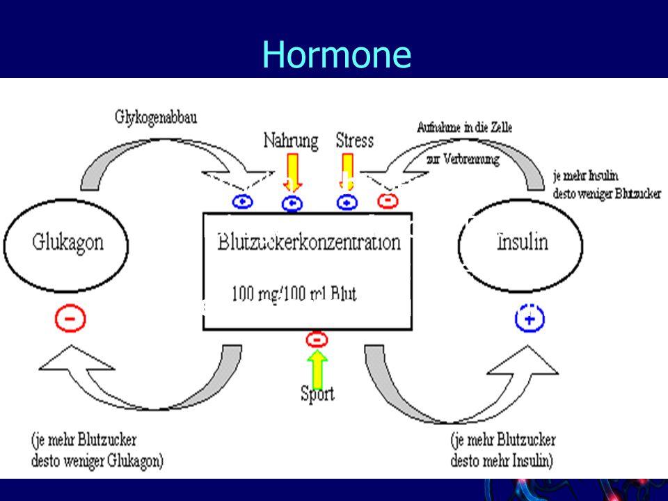 Hormone Wirkung von Insulin und Glukagon Insulin hebt den BZS