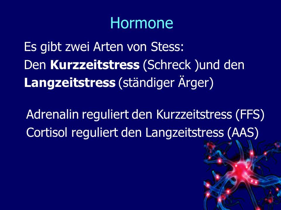Hormone Es gibt zwei Arten von Stess: