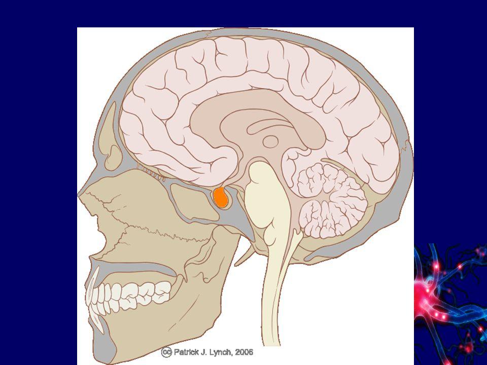 Hormone Steuerung der Hormondrüsen und deren Tätigkeit erfolgt von einer übergeordneten Hormondrüse: