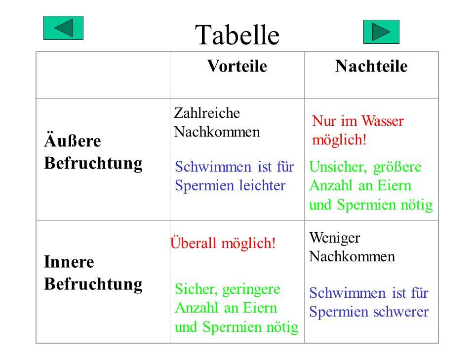 Tabelle Vorteile Nachteile Äußere Befruchtung Innere Befruchtung