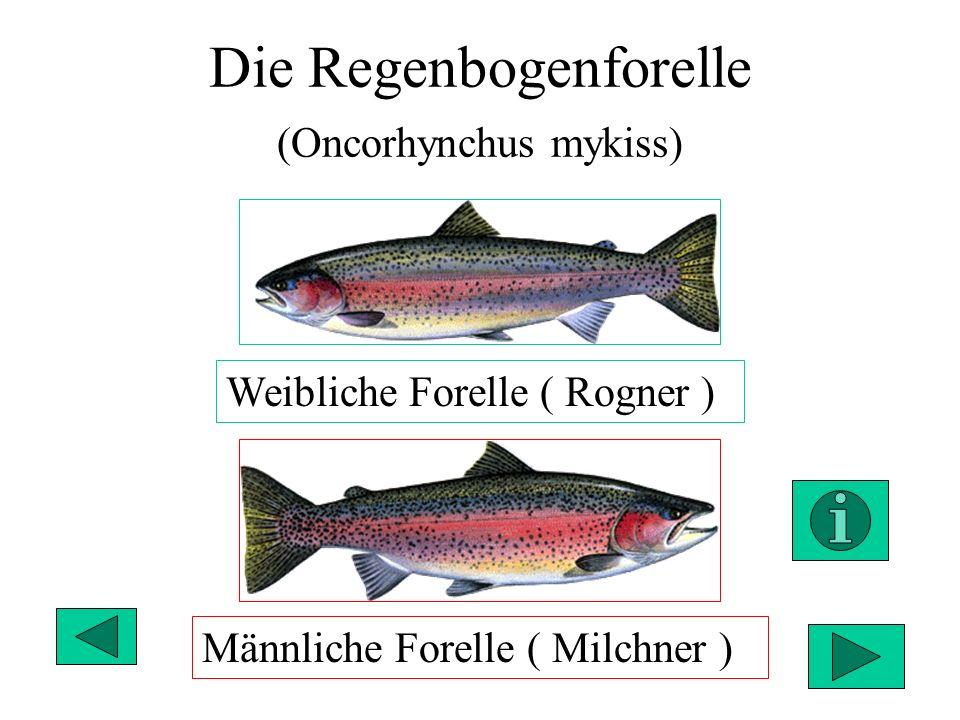 Ziemlich Weiblicher Fortpflanzungszyklus Zeitgenössisch - Anatomie ...