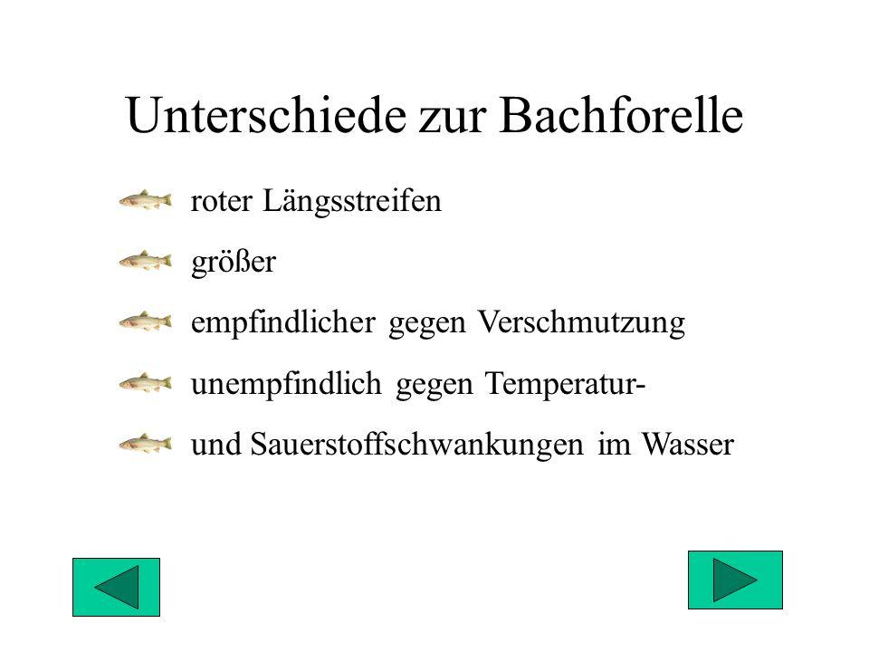 Unterschiede zur Bachforelle