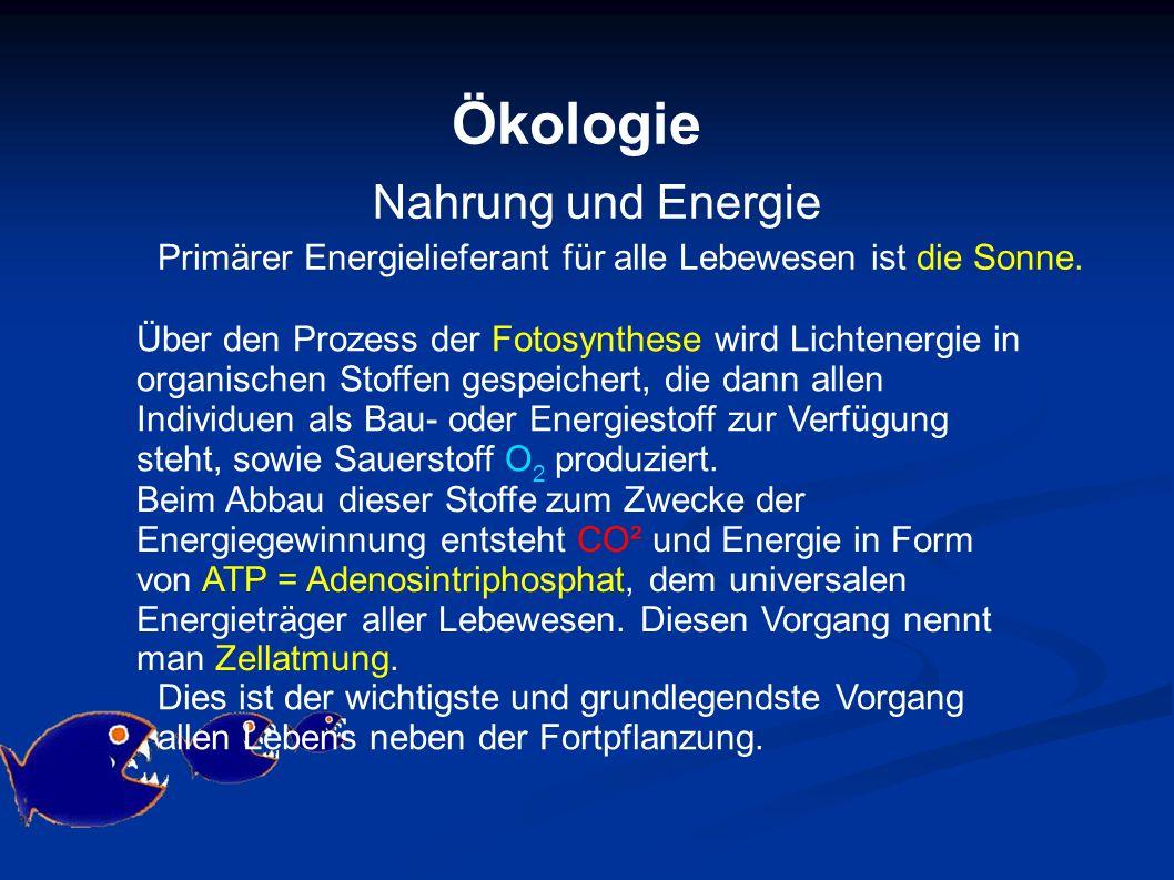 Ökologie Nahrung und Energie