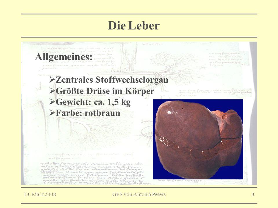 Die Leber Allgemeines: Zentrales Stoffwechselorgan
