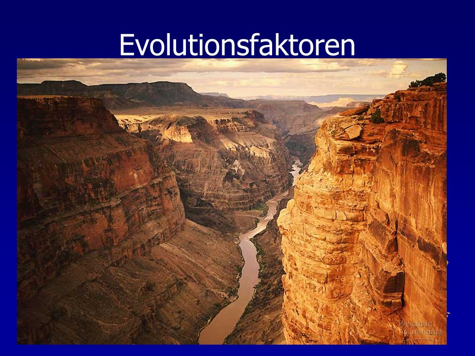 Evolutionsfaktoren Geographische Isolation = räumliche Separation