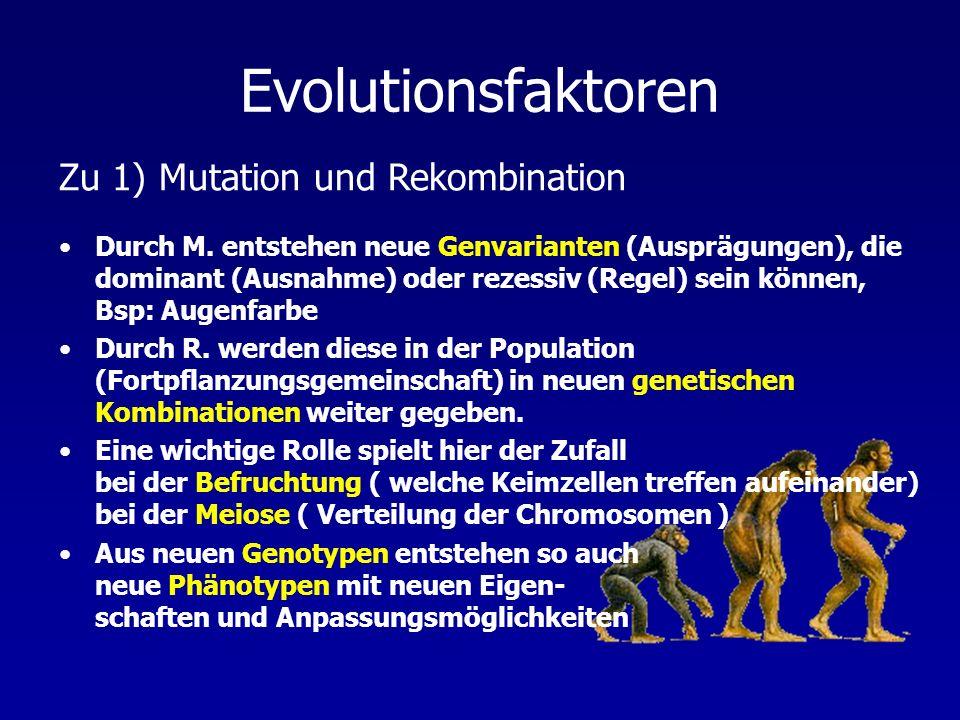 Evolutionsfaktoren Zu 1) Mutation und Rekombination