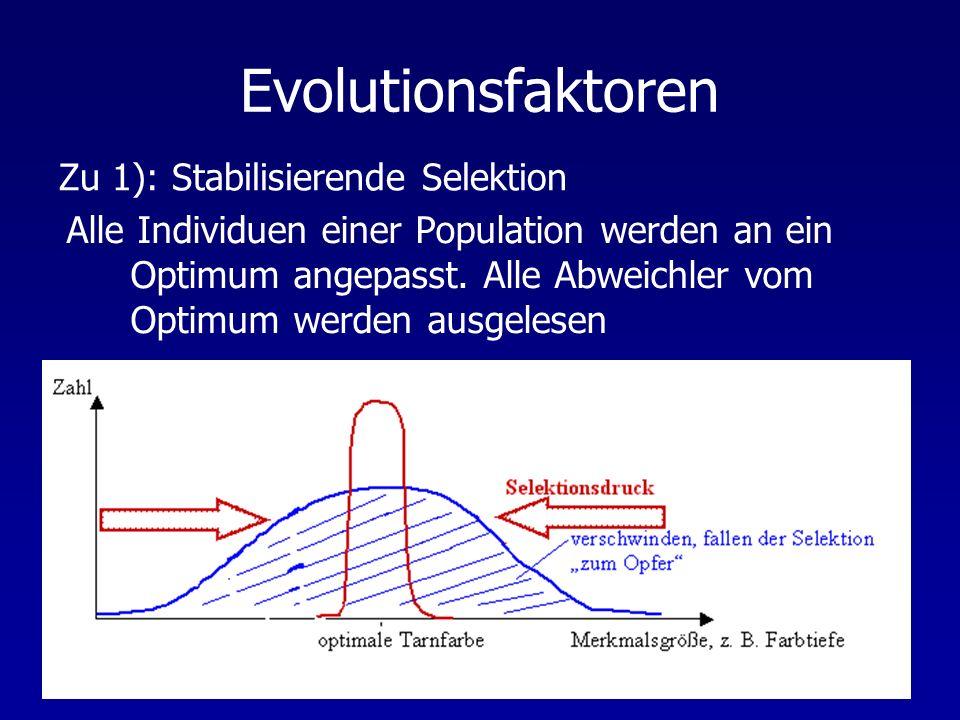 Evolutionsfaktoren Zu 1): Stabilisierende Selektion