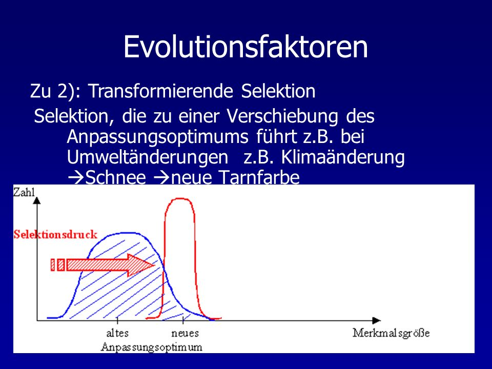Evolutionsfaktoren Zu 2): Transformierende Selektion
