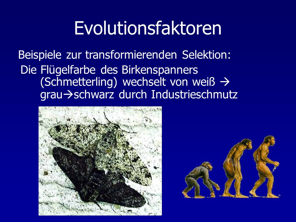 Evolutionsfaktoren Beispiele zur transformierenden Selektion:
