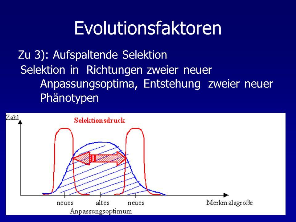 Evolutionsfaktoren Zu 3): Aufspaltende Selektion
