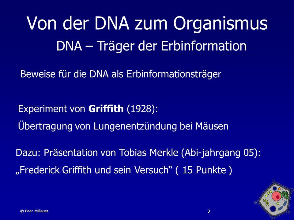 Von der DNA zum Organismus