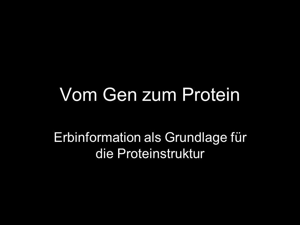 Erbinformation als Grundlage für die Proteinstruktur
