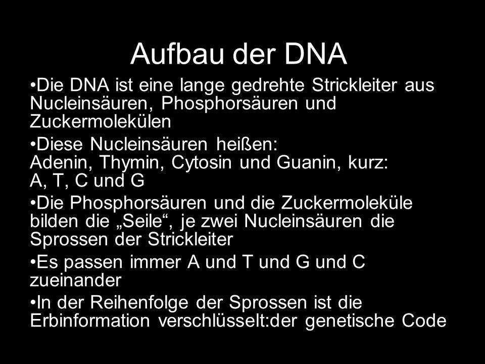 Aufbau der DNA Die DNA ist eine lange gedrehte Strickleiter aus Nucleinsäuren, Phosphorsäuren und Zuckermolekülen.