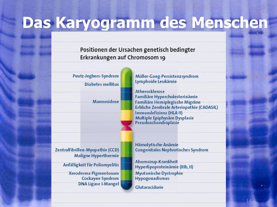 Das Karyogramm des Menschen