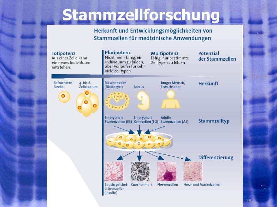 Stammzellforschung 01.08.2005, © Peer Millauer 28