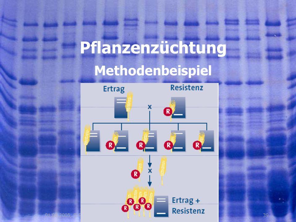 Pflanzenzüchtung Methodenbeispiel 01.08.2005, © Peer Millauer 39