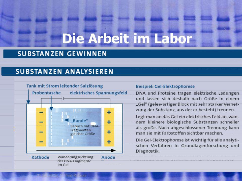 Die Arbeit im Labor 01.08.2005, © Peer Millauer 5