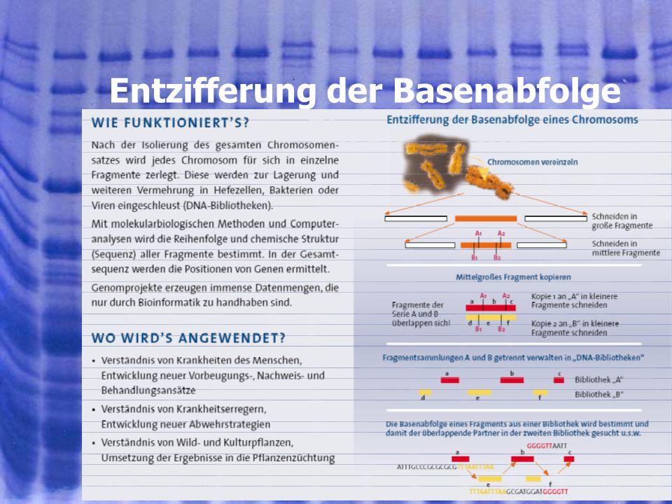 Entzifferung der Basenabfolge eines Chromosoms