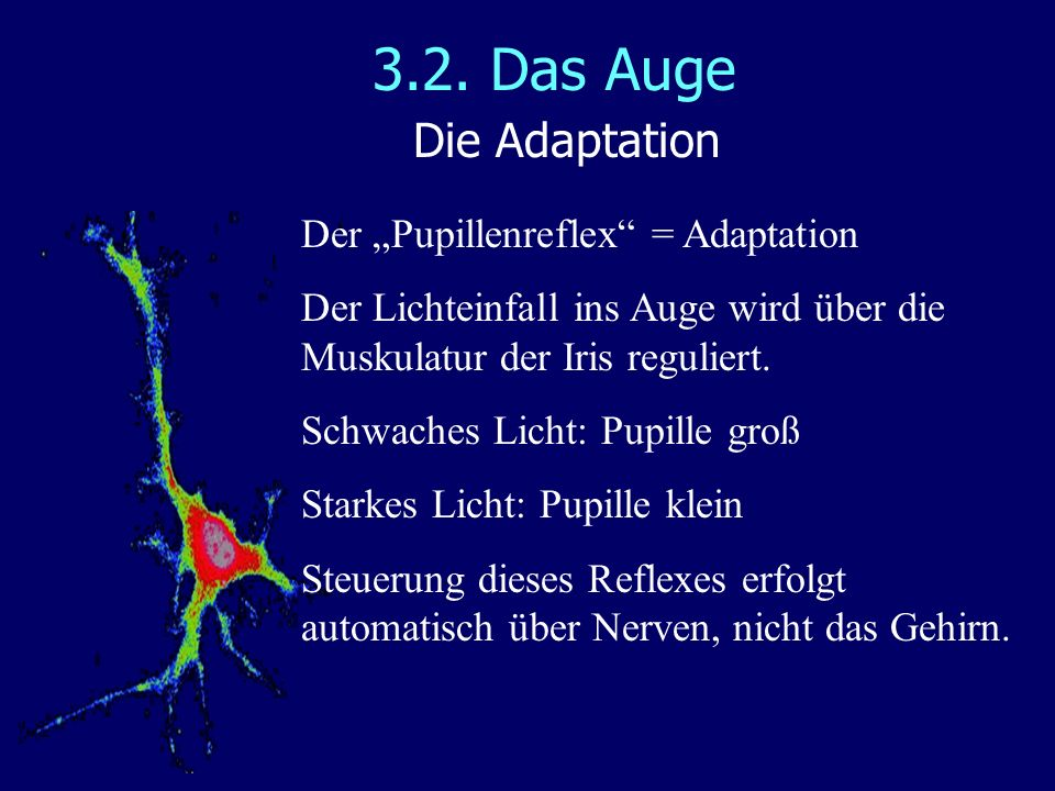 "3.2. Das Auge Die Adaptation Der ""Pupillenreflex = Adaptation"