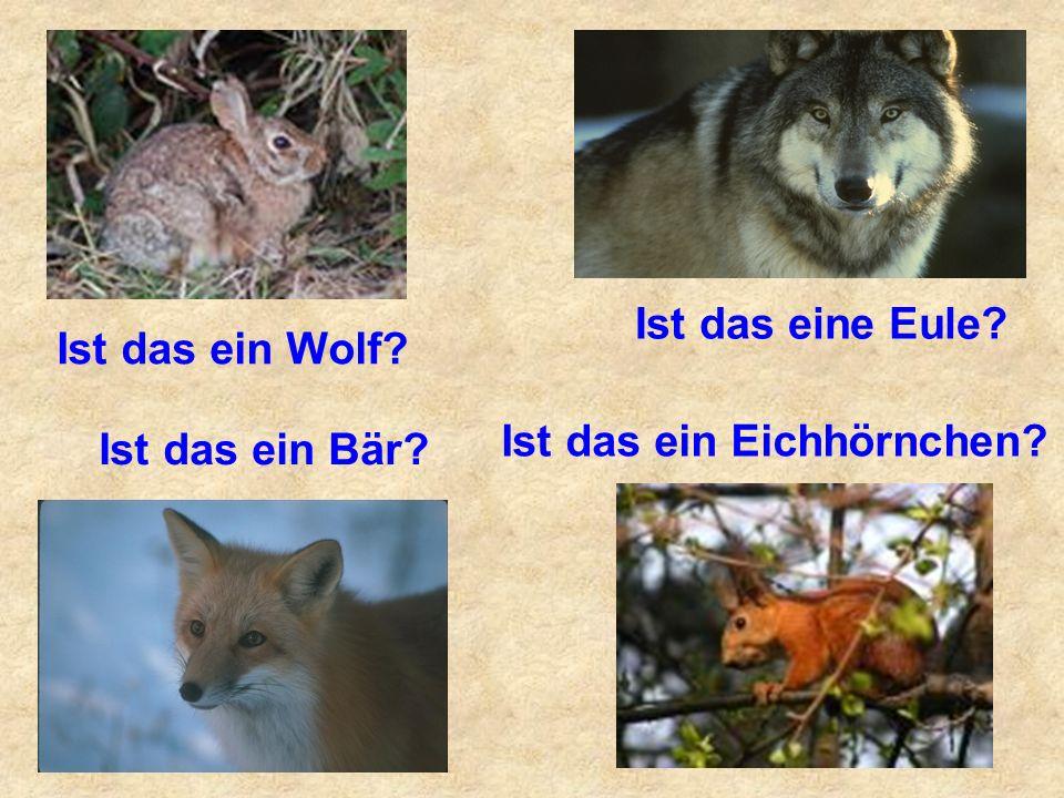 Ist das eine Eule Ist das ein Wolf Ist das ein Eichhörnchen Ist das ein Bär