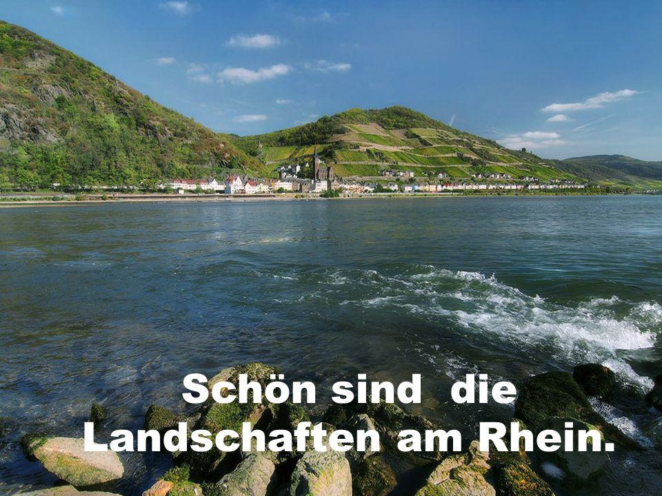 Schön sind die Landschaften am Rhein.