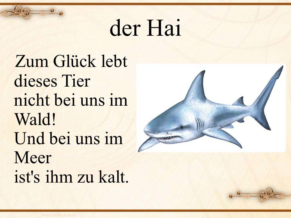 der Hai Zum Glück lebt dieses Tier nicht bei uns im Wald! Und bei uns im Meer ist s ihm zu kalt.