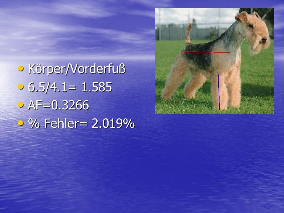Körper/Vorderfuß 6.5/4.1= 1.585 AF=0.3266 % Fehler= 2.019%