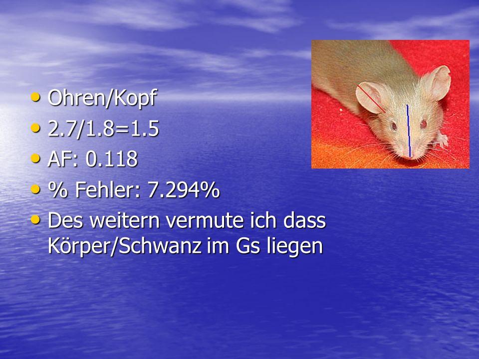 Ohren/Kopf 2.7/1.8=1.5. AF: 0.118.