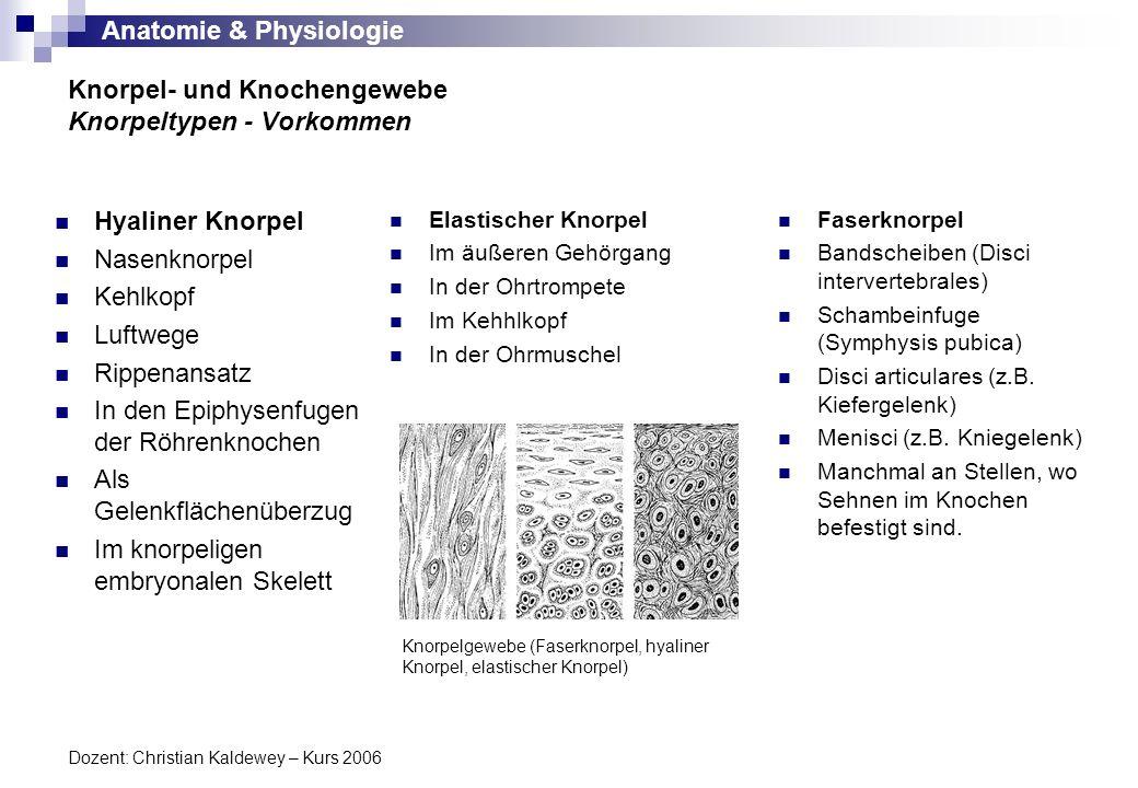 Knorpel- und Knochengewebe Knorpeltypen - Vorkommen