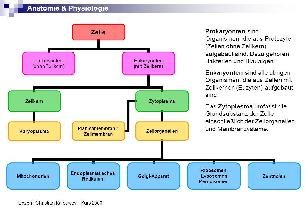 Prokaryonten sind Organismen, die aus Protozyten (Zellen ohne Zellkern) aufgebaut sind. Dazu gehören Bakterien und Blaualgen.