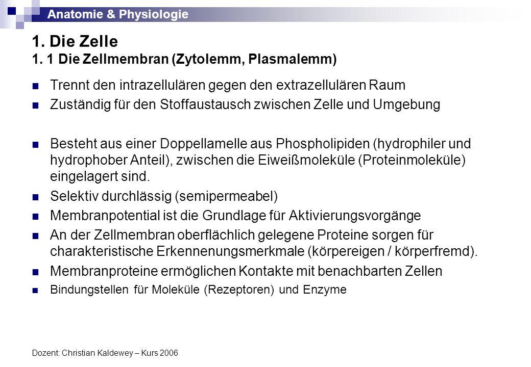 1. Die Zelle 1. 1 Die Zellmembran (Zytolemm, Plasmalemm)