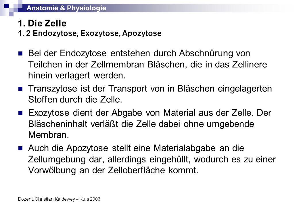 1. Die Zelle 1. 2 Endozytose, Exozytose, Apozytose