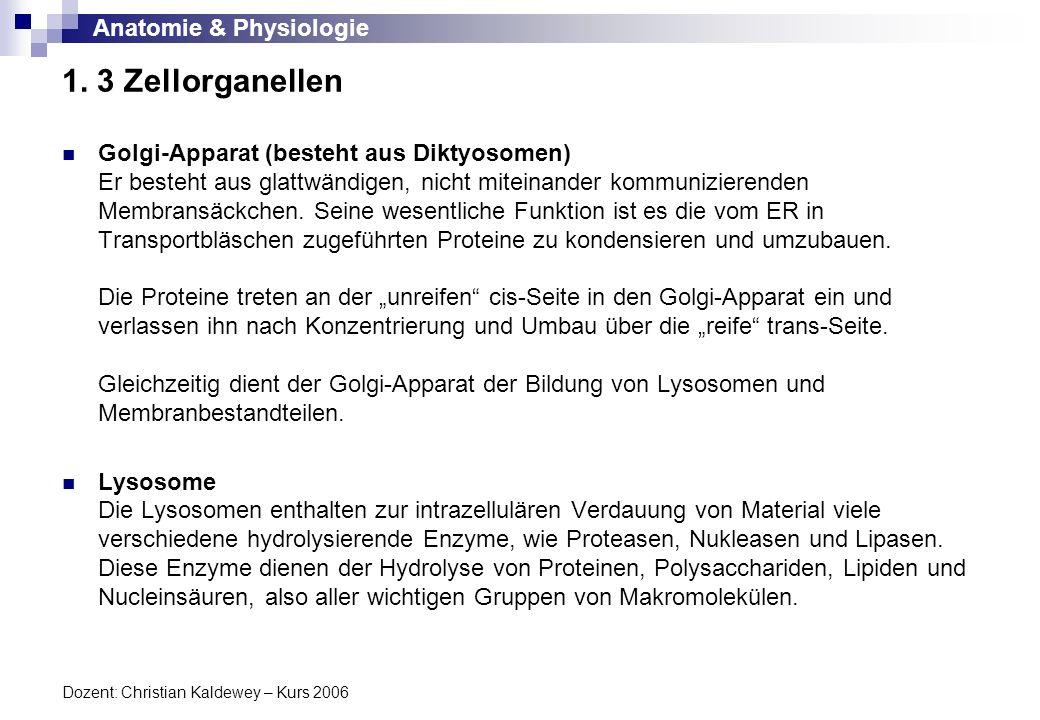 Niedlich Zellorganellen Struktur Und Funktion Arbeitsblatt Fotos ...