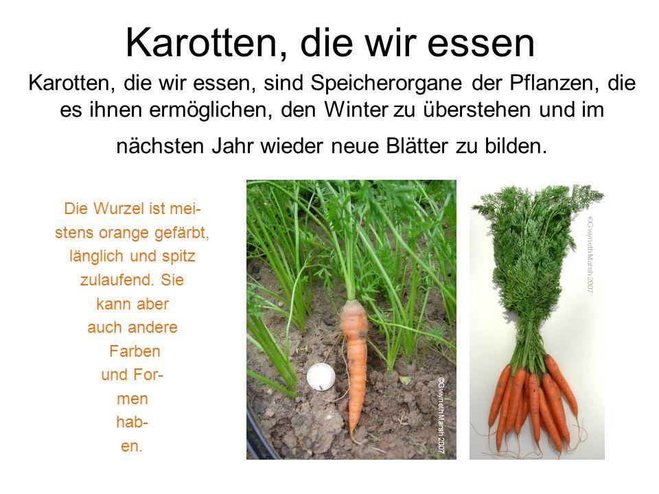 Karotten, die wir essen