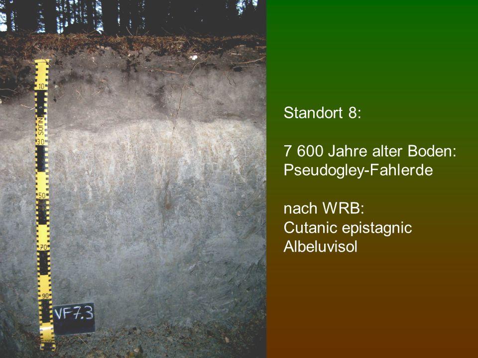 Standort 8: 7 600 Jahre alter Boden: Pseudogley-Fahlerde nach WRB: Cutanic epistagnic Albeluvisol