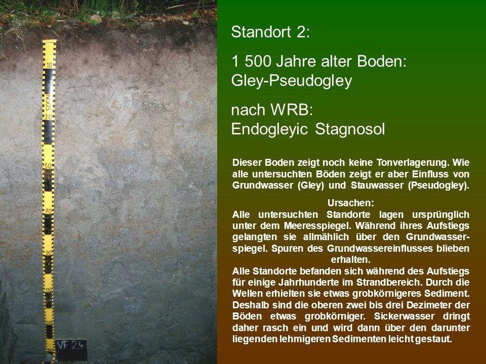 Standort 2: 1 500 Jahre alter Boden: Gley-Pseudogley nach WRB: Endogleyic Stagnosol