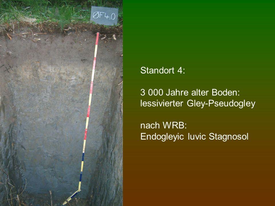 Standort 4: 3 000 Jahre alter Boden: lessivierter Gley-Pseudogley nach WRB: Endogleyic luvic Stagnosol