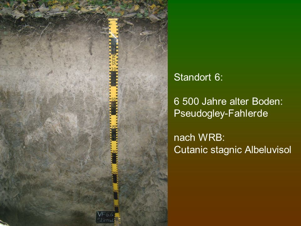 Standort 6: 6 500 Jahre alter Boden: Pseudogley-Fahlerde nach WRB: Cutanic stagnic Albeluvisol