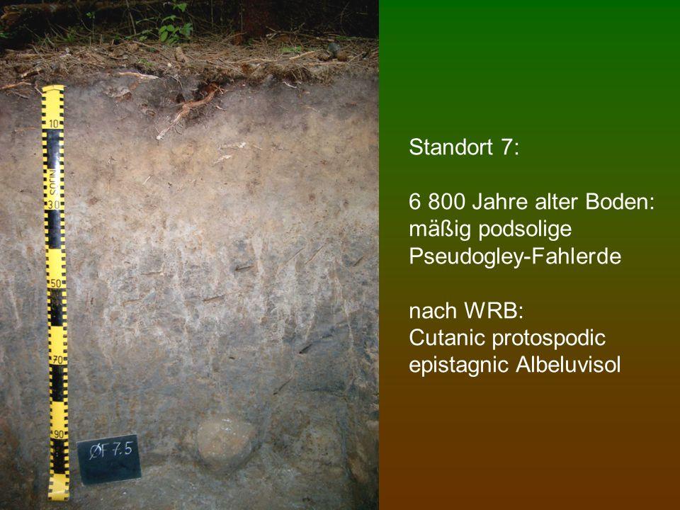 Standort 7: 6 800 Jahre alter Boden: mäßig podsolige Pseudogley-Fahlerde nach WRB: Cutanic protospodic epistagnic Albeluvisol